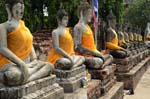 le statue gialle buddhiste di Ayutthaia